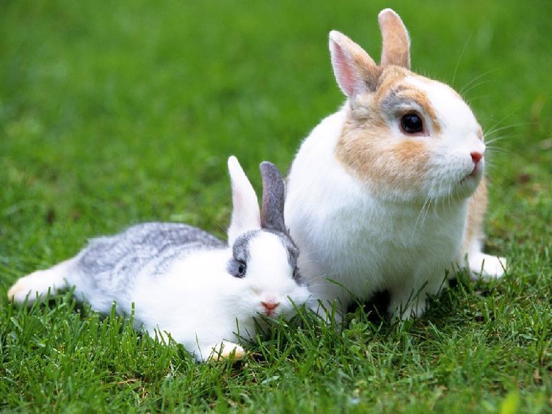 壁纸 动物 狗 狗狗 兔子 800_600